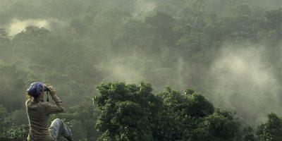 Blick über Regenwald